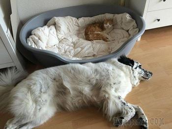 Коты, бессовестно отобравшие кроватки у бедных собачек