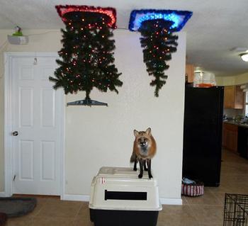 Как установить елку: 25 гениальных новогодних идей для владельцев кошек и собак
