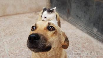 Одинокий котёнок убедил собаку стать его мамой