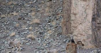Тест на зоркость: найдите на этом фото леопарда