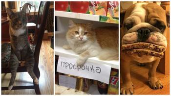 Веселые фотографии с животными, которые заставят вас улыбнуться