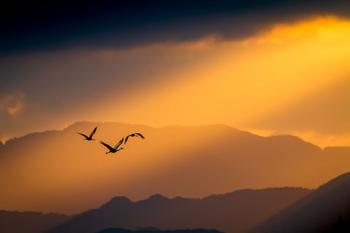 Фотографии финалистов конкурса Bird Photographer Of The Year