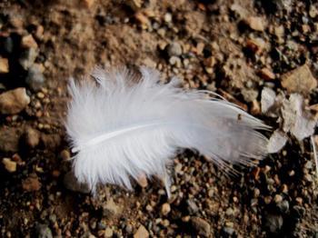 """Примета """"найти перо птицы"""": тонкости толкования"""