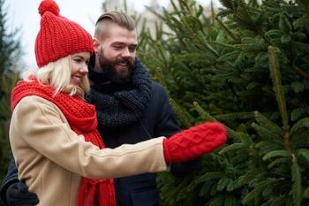 5 советов, как правильно выбирать живую елку на Новый год