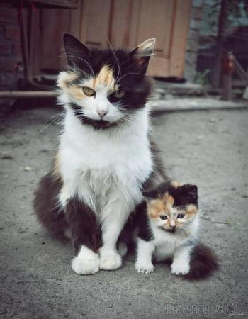 Как две капли: кошки и котята