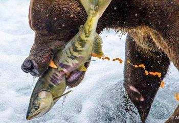 35 фотошедевров с конкурса «Лучшая фотография природы» от National Geographic