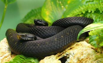 7 самых длинных змей планеты