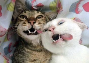 Сногсшибательно смешные коты