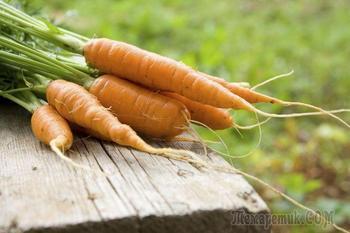 Самые сладкие сорта моркови для детского питания