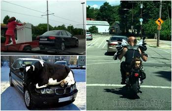 Чудаки на дорогах, встреча с которыми зарядит позитивом и заставит посмеяться от души