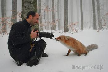 Красивые и хитрые такие лисы