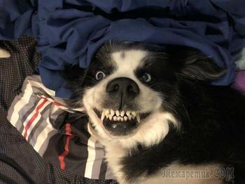 Эти собаки-зубаки поднимут настроение на целый день