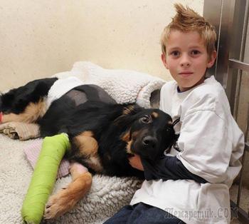 Невероятные истории о собаках-героях, ставших настоящими ангелами-хранителями