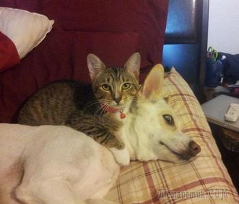 Смешные фото совместной жизни собак и кошек