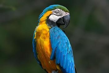 Рейтинг самых обучаемых попугаев