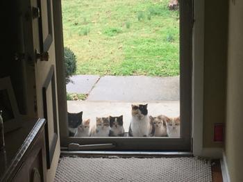 Кошки, которые появляются вдруг...