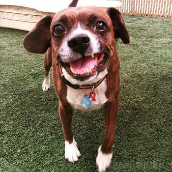 Собаки, которые чертовски мило улыбаются