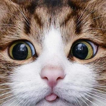Несколько кошек, которые понравятся даже тем, кто любит собак