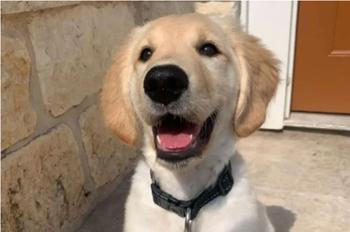 Девушка опубликовала фото щенка, после чего увидела пикантную подробность