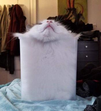 19 жидких кошек, которые будто говорят: «Я не подчиняюсь законам физики, я их создаю»