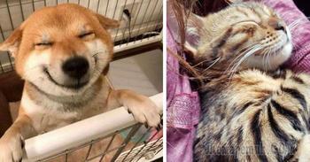 Фото, которые доказывают, что животные на 99 % состоят из любви