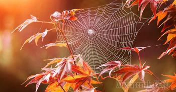 Акварельная осень (Стих)