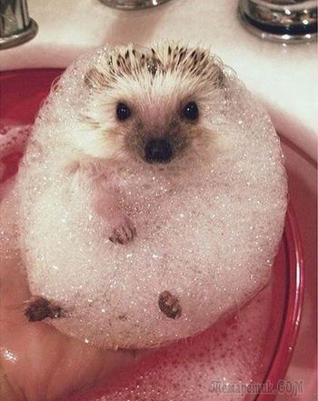 20 очаровательных купающихся животных, которые не прочь охладиться