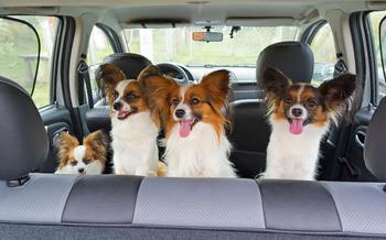 Безопасная перевозка животных в автомобиле: 10 простых правил