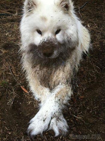 30 смешных песиков-грязнуль
