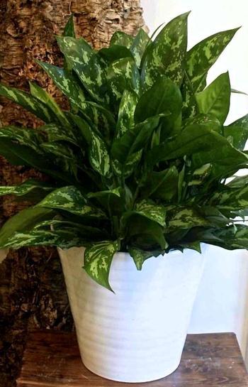 Комнатные цветы для лентяев и трудоголиков