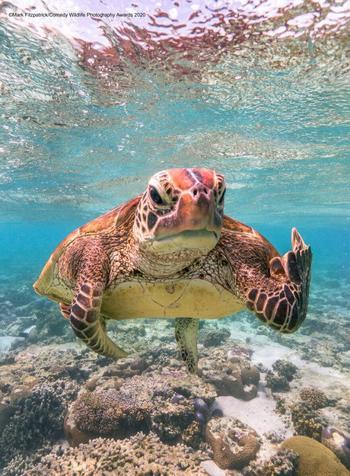 Самые смешные фотографии дикой природы 2020 года
