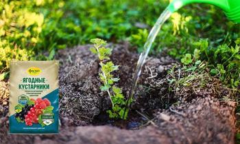 Правила подкормки крыжовника весной, летом и осенью: чем лучше всего удобрять