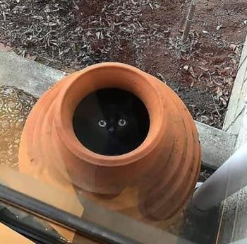 Настоящая кошка непременно залезет туда, куда ей категорически запрещено