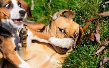Когда улыбка до хвоста: финалисты фотоконкурса Comedy Pet Photography Awards