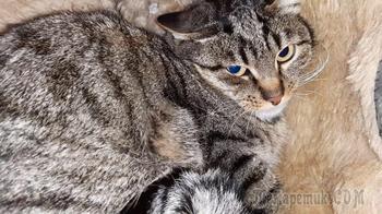 Бездомному котику из Сиротино нужен дом!