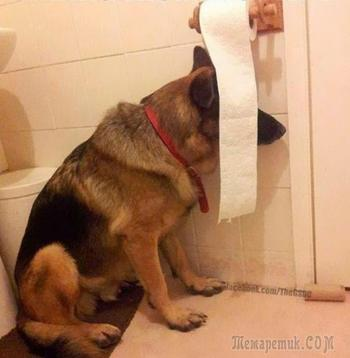 Смешные собаки, которые совершенно не умеют играть в прятки