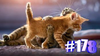 Смешные коты | Приколы с котами | Видео про котов | Котомания # 178 (видео)