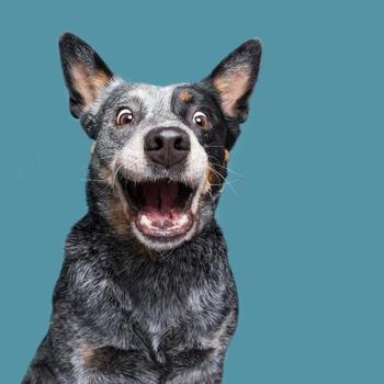 Эмоциональные и весёлые фотографии собак, показывающие, насколько уникальна каждая из них