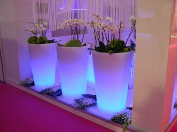 Как с помощью комнатных растений украсить дом