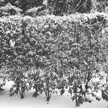А вы найдете панду в этом зимнем пейзаже?