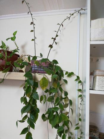 Отдали растение,но никто не знает что это. Помогите, пожалуйста!