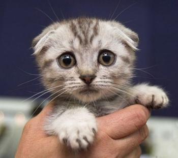 """Самые очаровательные """"печальные"""" коты интернета"""