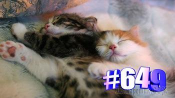 Кошки спят Милота (часть 2)👍🤣🐱