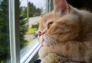 Кошки у окна