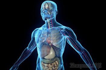Самые бесполезные органы человеческого тела