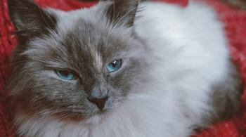 Беременная кошка плакала в подвале, зовя на помощь
