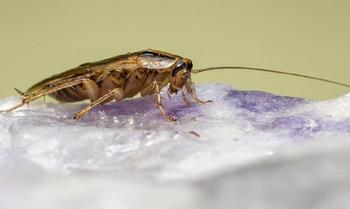 Как тараканы превращаются в неуязвимых суперсуществ