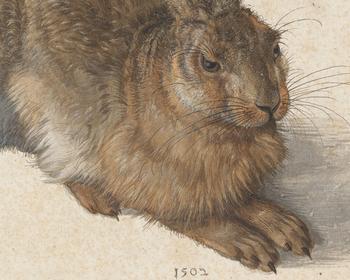 Дюрер в Вене: «Заяц», «Руки» и автопортреты – главные экспонаты ретроспективы