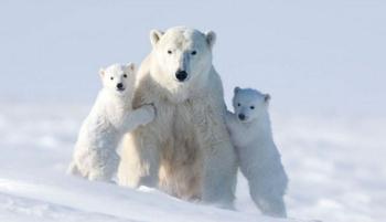 Ради этих кадров фотограф провел 117 часов на лютом морозе