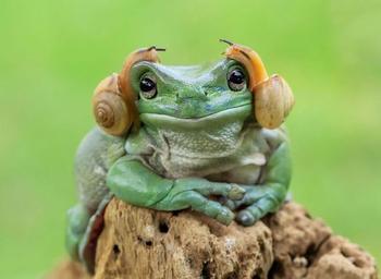 16 позитивных фотографий лягушек